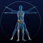 Human Body Works